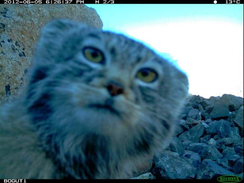 Ooit al eens een wildcamera gecontroleerd in de echte wilde natuur van Siberië?!?