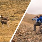 argali and tourists
