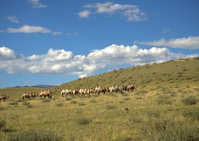 Chuya steppe with camels