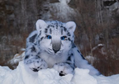 snow leopard (3)